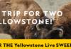 yellowstone sweepstakes live