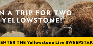 yellowstone sweepstakes live